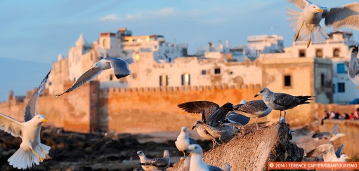 An Essaouira Walking Tour