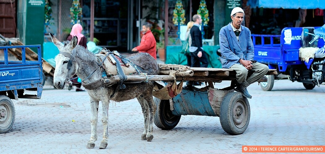 Donkey, driver and cart, Djemaa el Fna, Marrakech, Morocco.