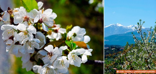 The Hills are Alive with Catalan Culture and Cherry Blossoms