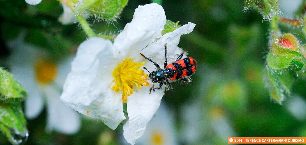 Bugs and insects, Alberobello, Puglia, Italy.