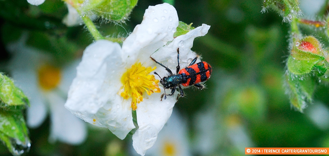 Bugs and insects, Alberobello, Puglia, Italy. Copyright 2014 Terence Carter / Grantourismo. All Rights Reserved.
