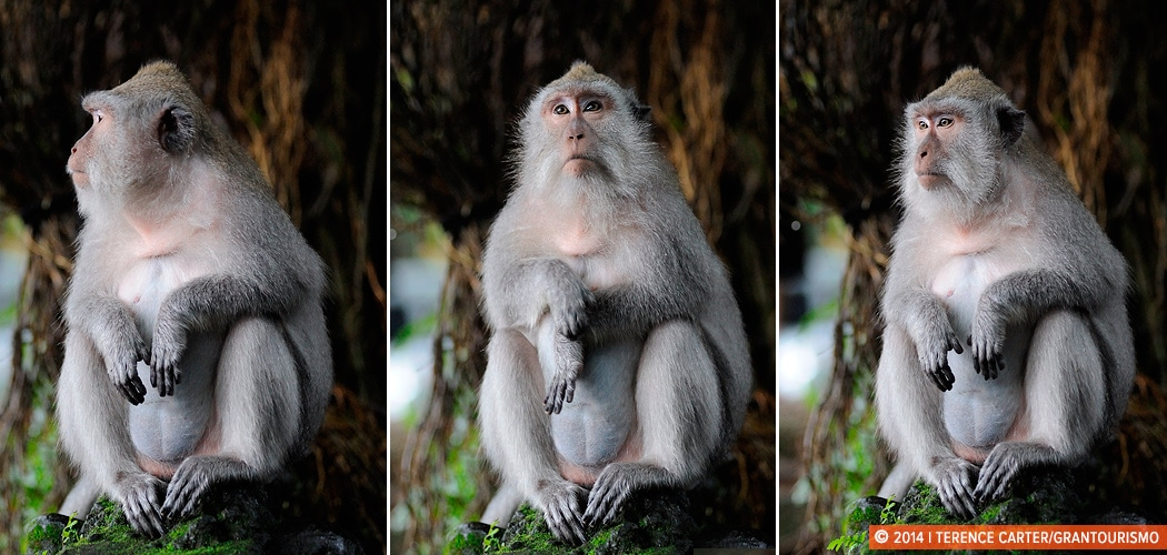 The Sacred Monkey Forest Sanctuary, Ubud, Bali, Indonesia. Copyright 2014 Terence Carter / Grantourismo. All Rights Reserved.