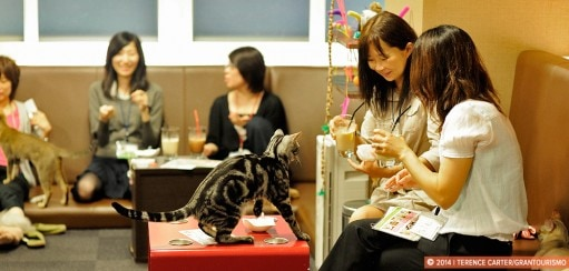 Cat Cafes and Other Tokyo Eccentricities