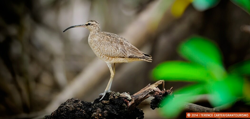 Mangrove tour, Puntarenas, Costa Rica