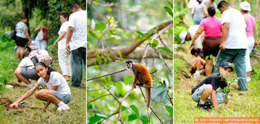 Planting Trees to Save the Titi Monkeys