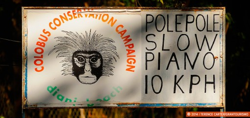 More Monkey Business: The Colobus Trust, Diani Beach