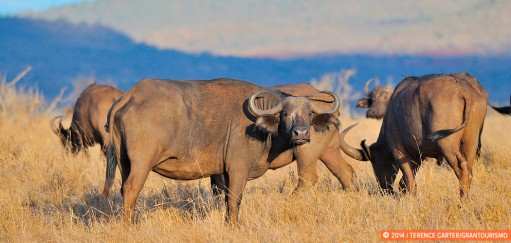 Going to the Masai Mara to Glimpse The Great Migration