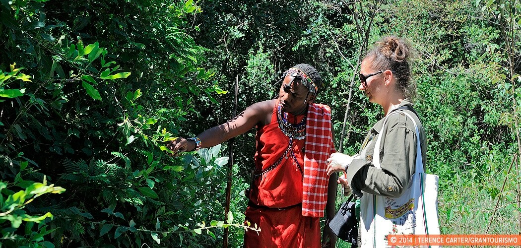 A Nature Walk in the Masai Mara with a Maasai Warrior, Kenya.