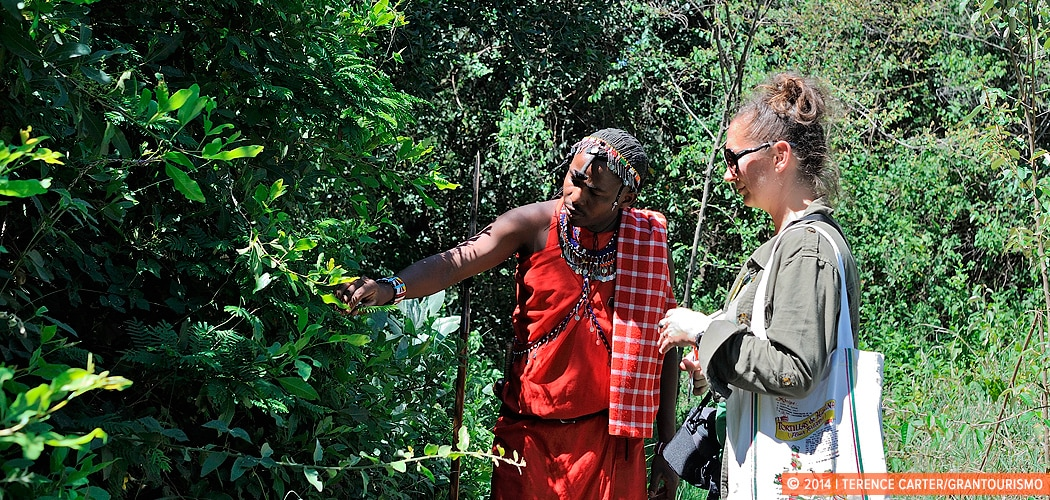 A Nature Walk in the Masai Mara with a Maasai Warrior, Kenya. Copyright 2014 Terence Carter / Grantourismo. All Rights Reserved.