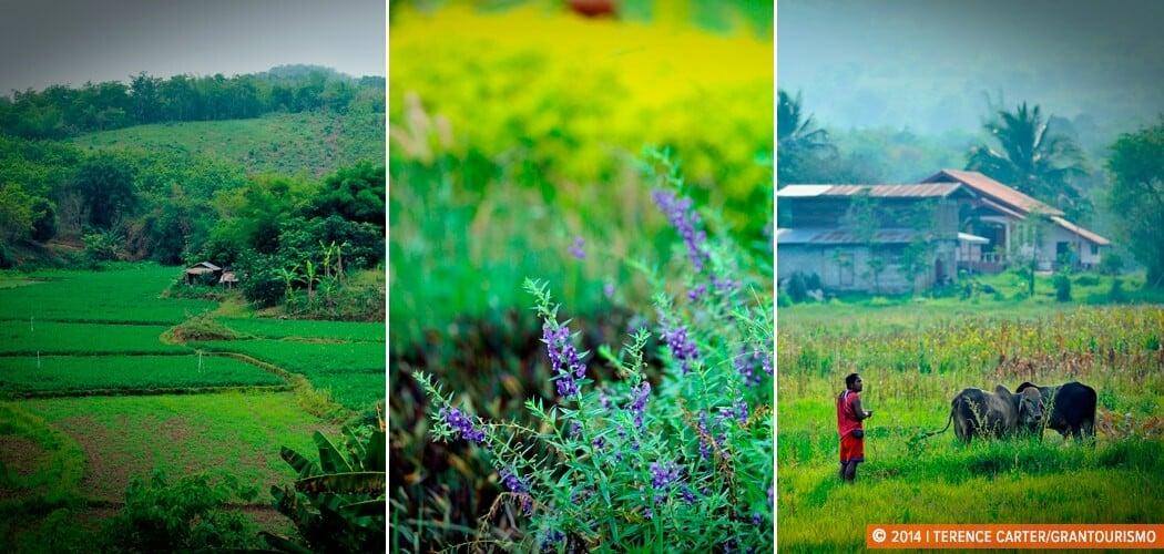 Backroads, Isaan, Thailand.