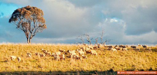 24 Hours in Orange for Food and Wine Lovers — A Taste of Orange, New South Wales