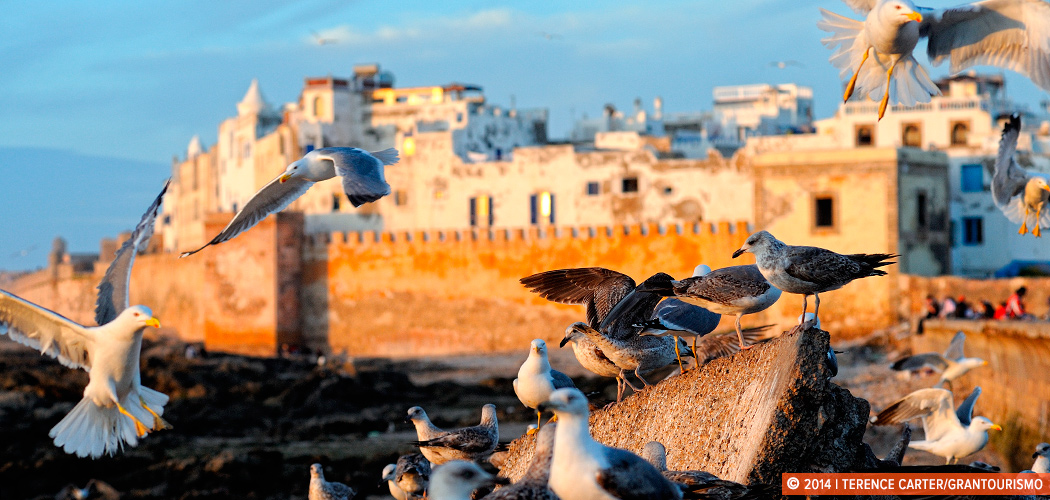 Essaouira, Morocco. Copyright 2014 Terence Carter / Grantourismo. All Rights Reserved.
