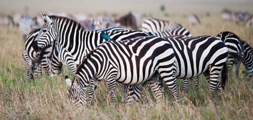 Grantourismo Travel Guide to Africa – How to Travel Slow, Local and Experiential in Africa
