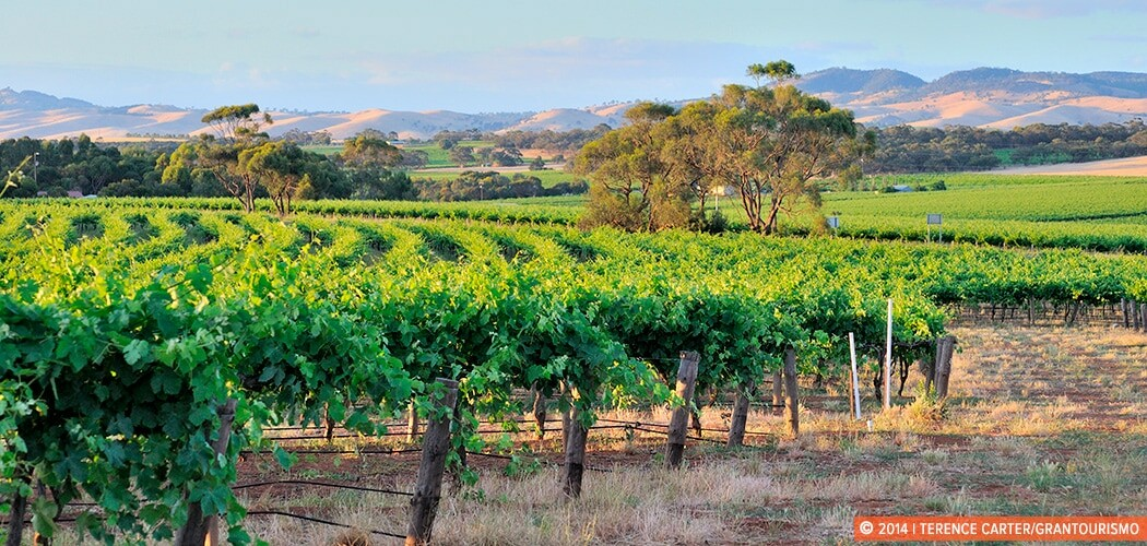 Barossa Valley, South Australia. Copyright 2014 Terence Carter / Grantourismo. All Rights Reserved.