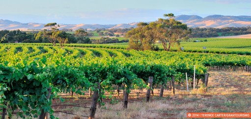 Food and Wine Road Trips in Australia — The Most Delectable Drives To Do