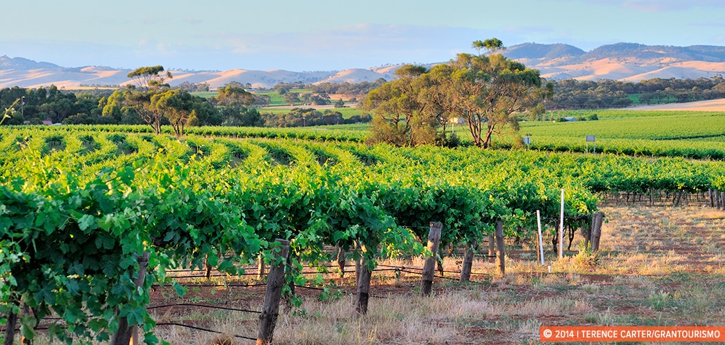 Barossa Valley, South Australia. Copyright 2014 Terence Carter / Grantourismo. All Rights Reserved. food and wine road trips in Australia