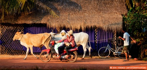 Cycling Around Siem Reap – From Riverside Rides to Temple Bike Tours