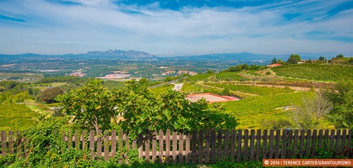 Best Cava Wineries Near Barcelona – A Penedès Wine Region Road Trip