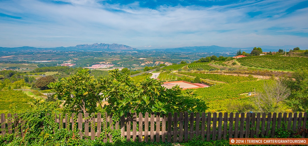 Best cava wineries near Barcelona. Views from Cavas Llopart, Penedès, Catalunya, Spain. Copyright 2014 Terence Carter / Grantourismo. All Rights Reserved.