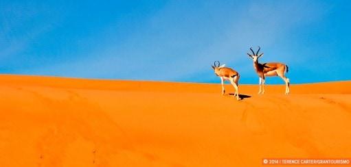 A Drive Through the Desert from Abu Dhabi to Al Ain