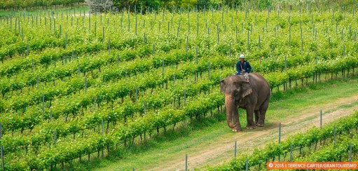 Best Southeast Asian Wineries to Sip Local Wine and Savour Views