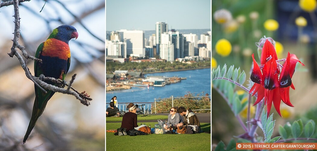 King's Park. Picnic Spots, Parks and Gardens in Perth. Perth, We