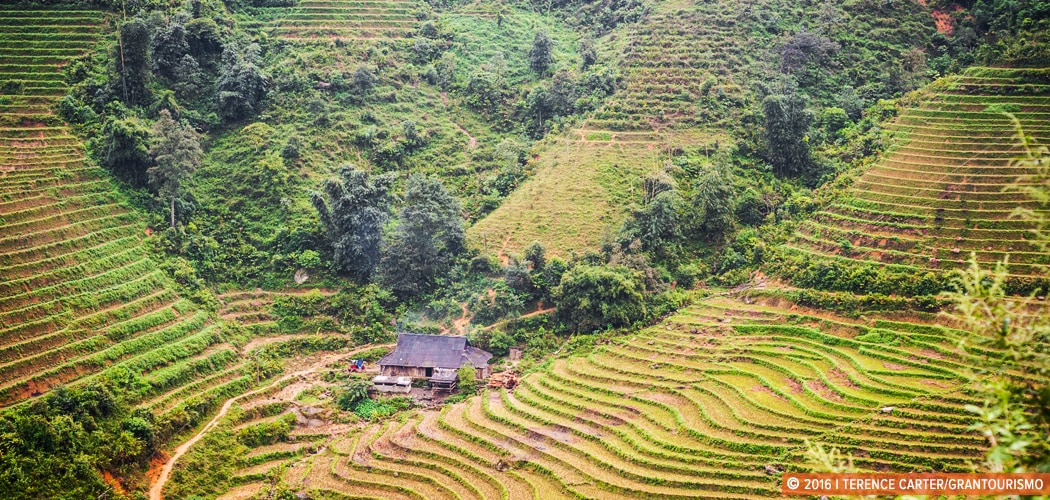 Terraced farms outside Sapa, Vietnam. Copyright 2016 Terence Carter / Grantourismo. All Rights Reserved. Vietnam travel tips.