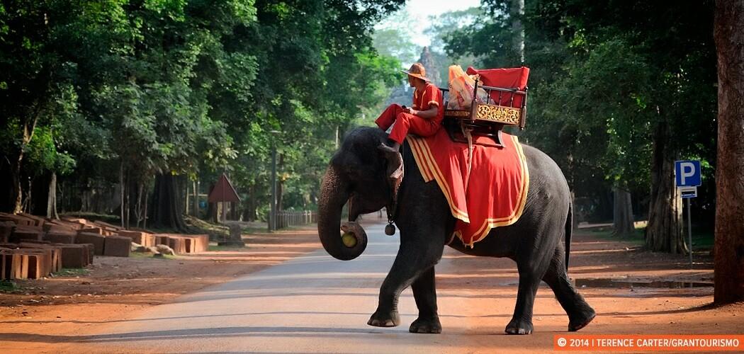 Elephant at Angkor Wat, Siem Reap, Cambodia.
