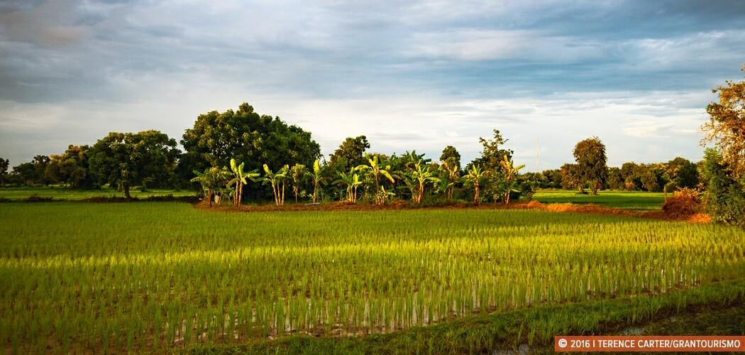 Rice fields surround Battambang town. Battambang, Cambodia.