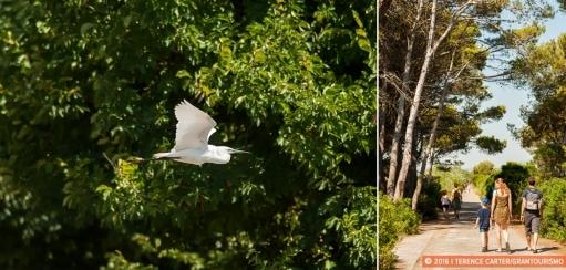 Mallorca Birdwatching – Spring on Mallorca Is Birding Time