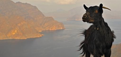 Dubai to Musandam Peninsula Road Trip – Driving Arabia's Norway