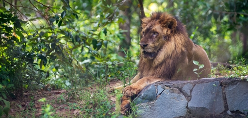 Cambodia Wildlife Experiences – Where to Enjoy Ethical Animal Encounters