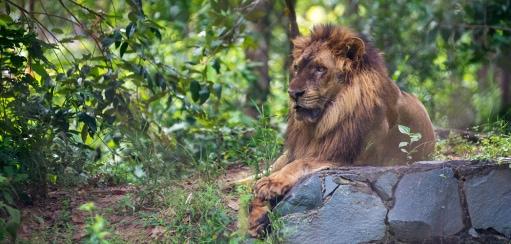 Cambodia Wildlife Experiences – Where to Enjoy Ethical Animal Encounters