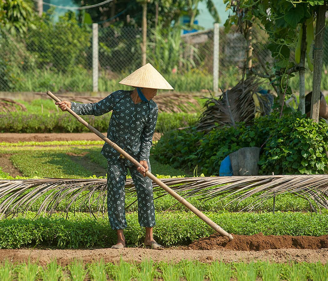 Organic farm, Hoi Ain, Quang Nam Province, Vietnam. Copyright © 2019 Terence Carter / Grantourismo. All Rights Reserved. Vietnam 2019 Cuisine and Culture Tour.