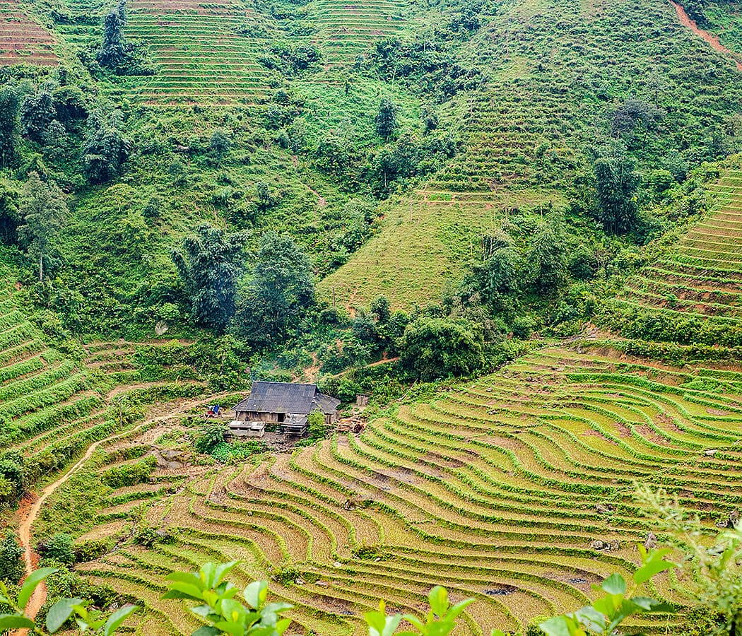 Sapa rice terraces, Vietnam. Copyright © 2019 Terence Carter / Grantourismo. All Rights Reserved. Vietnam 2019 Cuisine and Culture Tour.