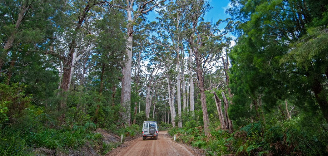 Driving from Margaret River to Denmark to Discover Western Australia's Southern Forests. Copyright © 2019 Terence Carter / Grantourismo. All Rights Reserved.